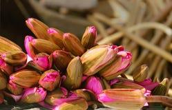 Wody lilly bukiet, piękny kwiat Obrazy Stock