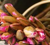 Wody lilly bukiet, piękny kwiat Obrazy Royalty Free