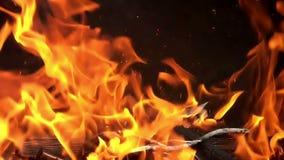 Woedende Brand op Zwarte Achtergrond - Langzame Motie 01 stock footage