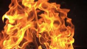 Woedende Brand op Zwarte Achtergrond - Langzame Motie I stock videobeelden