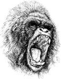 Woedende gorillaillustratie Stock Afbeelding