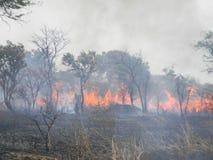 Woedende struikbrand in een savanneweide Stock Afbeelding