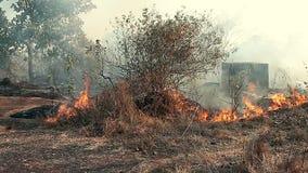 Woedende vuurzee in het bos stock video