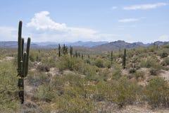 Woestijn在亚利桑那,沙漠在亚利桑那 库存照片