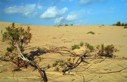 Woestijn. Stock Foto