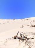 Woestijn royalty-vrije stock foto's
