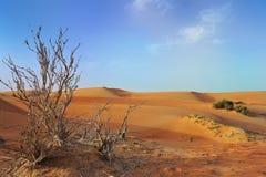 Woestijn Stock Foto's