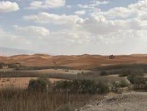 Woestijn Al Ain de V.A.E Abu Dhabi Safari Stock Foto's