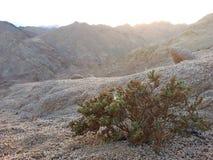 Woestijn Bush royalty-vrije stock afbeeldingen