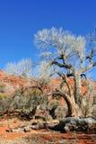 Woestijn deadwood Royalty-vrije Stock Fotografie