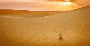 Woestijn dichtbij Al Ain, de V.A.E bij dageraad royalty-vrije stock foto's