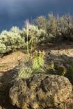 Woestijn in een onweer royalty-vrije stock fotografie