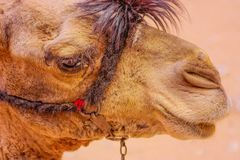 Woestijn in Egypte royalty-vrije illustratie