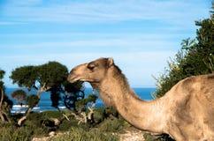 Woestijn in Egypte Stock Afbeelding