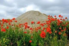 Woestijn en bloemen 2 Stock Foto