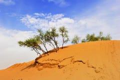 Woestijn en bomen stock foto