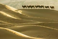 Woestijn en kamelen Stock Afbeeldingen