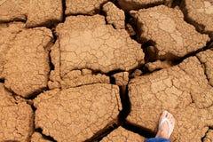 Woestijn gebarsten installatie - voorraadfoto Stock Foto's