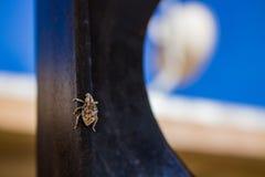 Woestijn Insect genoemde Fred royalty-vrije stock fotografie