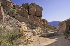 Woestijn landcsape Stock Foto