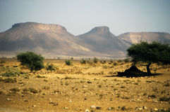 Woestijn in Marokko Royalty-vrije Stock Afbeelding