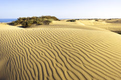 Woestijn Maspalomas Gran Canaria Stock Afbeelding