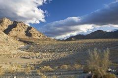 Woestijn Mesquite Royalty-vrije Stock Afbeeldingen