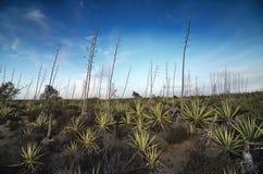 Woestijn met agaves in Cabo DE Gata Stock Afbeelding