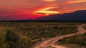 Woestijn met droge installaties bij zonsondergang in het nationale park van Altyn Emel, Kazachstan, Centraal-Azië 4K TimeLapse -  stock footage