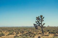 Woestijn Mojave, Californië Cactussen en woestijnbomen stock afbeelding