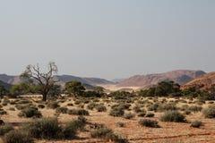 Woestijn in Namibië Stock Foto