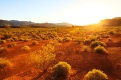 Woestijn over zonsondergang, Nevada stock afbeelding
