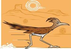 Woestijn Roadrunner Stock Afbeeldingen