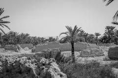 Woestijn van figuig, Marokko stock foto's