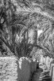 Woestijn van figuig, Marokko stock afbeeldingen