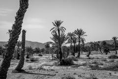 Woestijn van figuig, Marokko stock foto