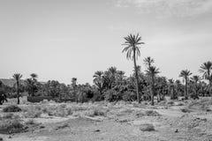 Woestijn van figuig, Marokko royalty-vrije stock afbeelding