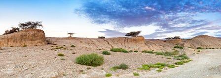 Woestijn van Negev bij dageraad, Israël Royalty-vrije Stock Afbeeldingen