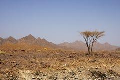 Woestijn van Oman Royalty-vrije Stock Afbeeldingen