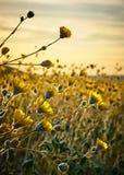 Woestijnbloemen stock afbeeldingen