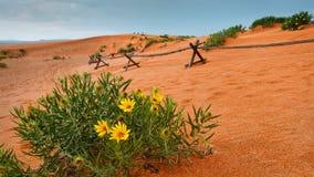 Woestijnbloemen bij Coral Pink Sand Dunes State-Park royalty-vrije stock afbeeldingen