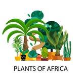 Woestijnbloemen Exotische installatie, struik, palm, cactus vectorreeks royalty-vrije illustratie