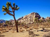 Woestijnbomen Stock Foto's