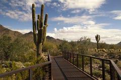 Woestijncactus en bergen stock fotografie