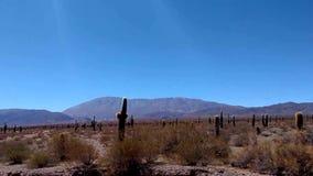 Woestijngebied, cactusbos en bergen stock video