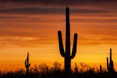 Woestijnhemel Royalty-vrije Stock Afbeeldingen