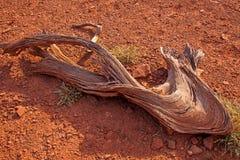 Woestijnhout Royalty-vrije Stock Afbeeldingen