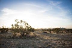 Woestijninstallatie met Zon die in de Horizon toenemen royalty-vrije stock fotografie