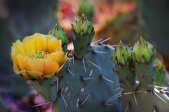 Woestijnkleur Stock Foto's