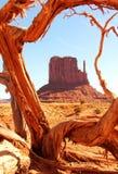 Woestijnlandschap Royalty-vrije Stock Foto